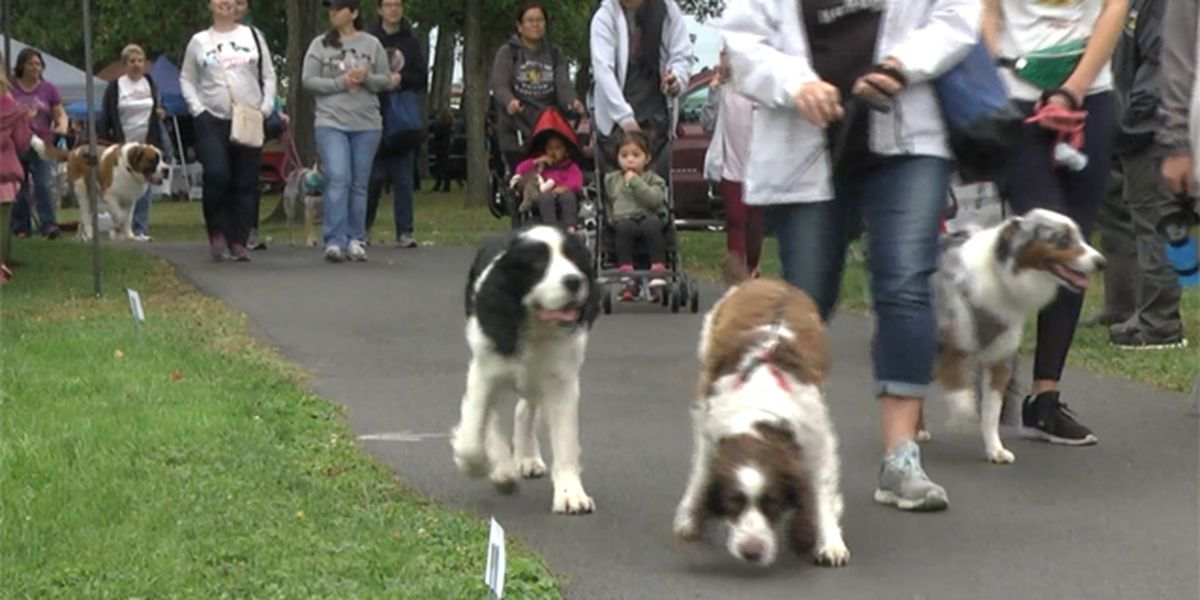 Dogs & their humans walk to support canine cancer cure