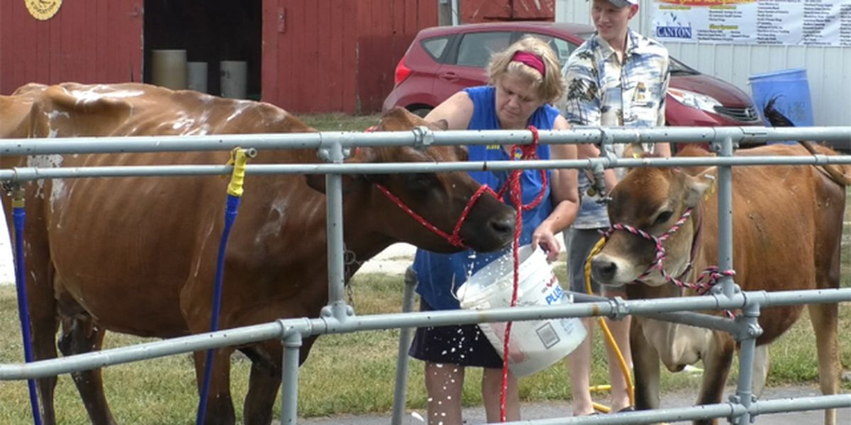 Before the midway, livestock take spotlight at county fair