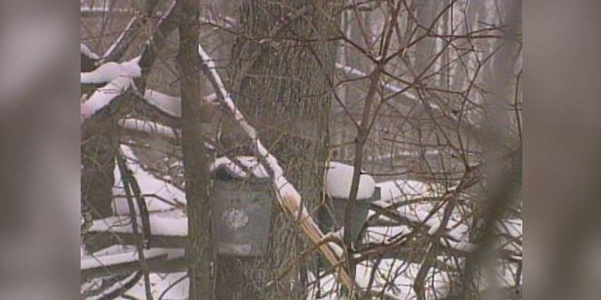 Blast from the Past: 1998 maple syrup season