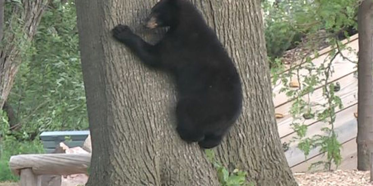Wandering bear pays a visit to Potsdam