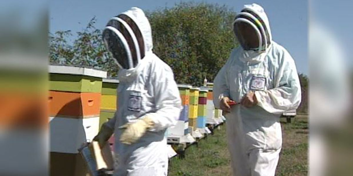Blast from the Past: 2001 local honey