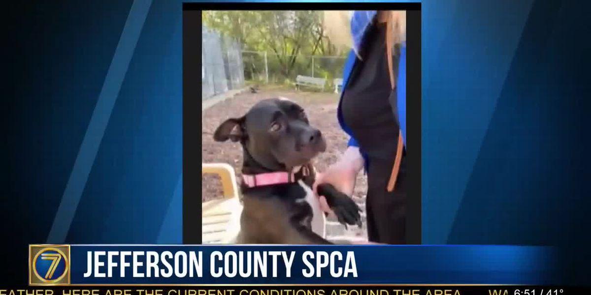 SPCA: Trunk or Treat, vaccine clinics & Shanty