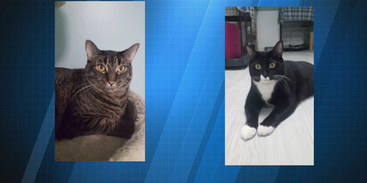 SPCA: Cheeto & Chacarta, a bonded pair