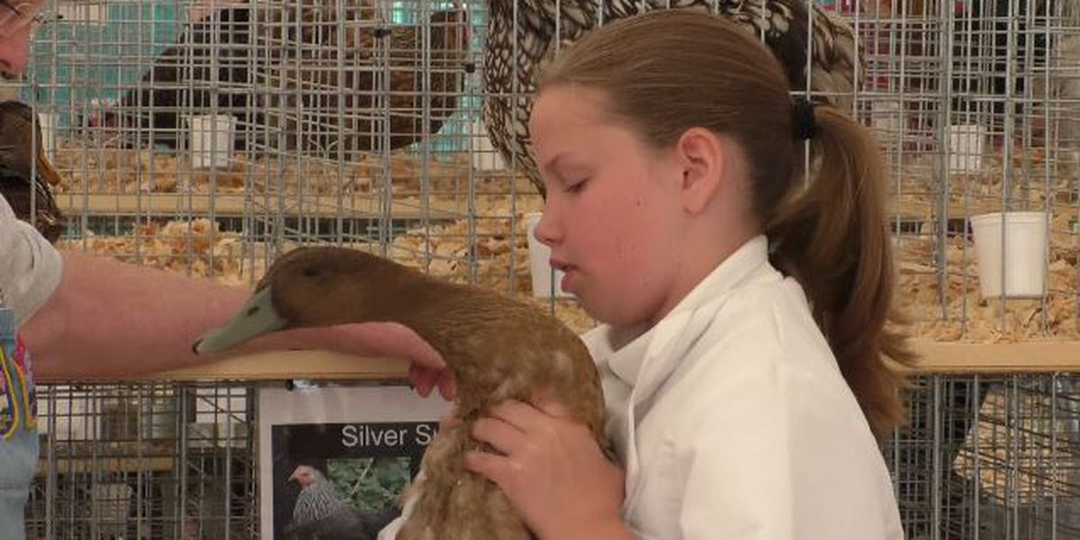 Prized poultry is something to crow about at Jefferson County Fair