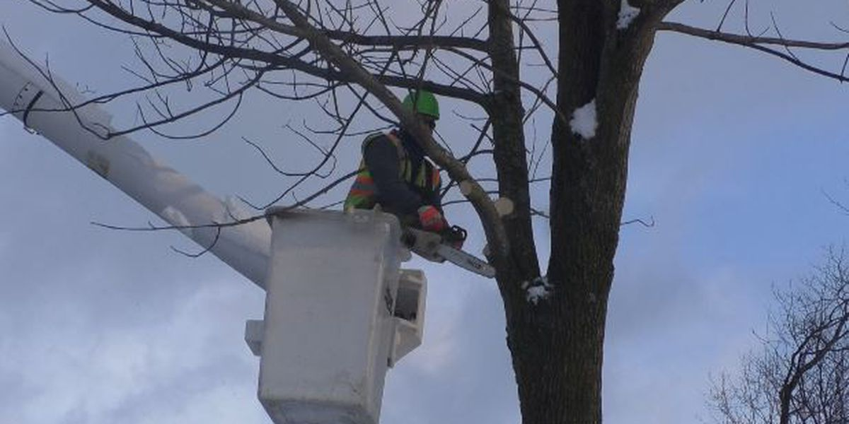 Watertown removes ash trees to fight insect