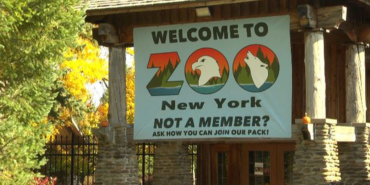 Zoo New York excited about increased attendance