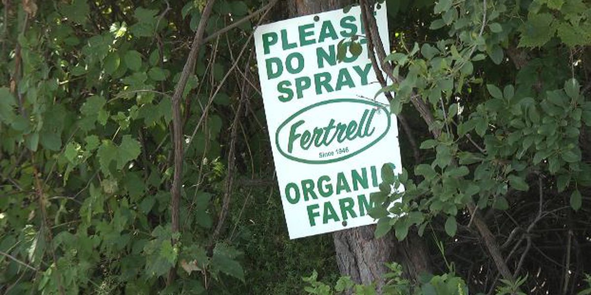 Some organic farmers worry about weed killer use