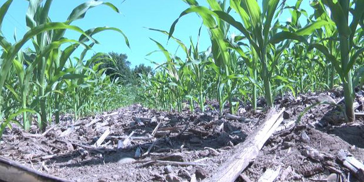 Local farmers worry about domino effect of wet planting season