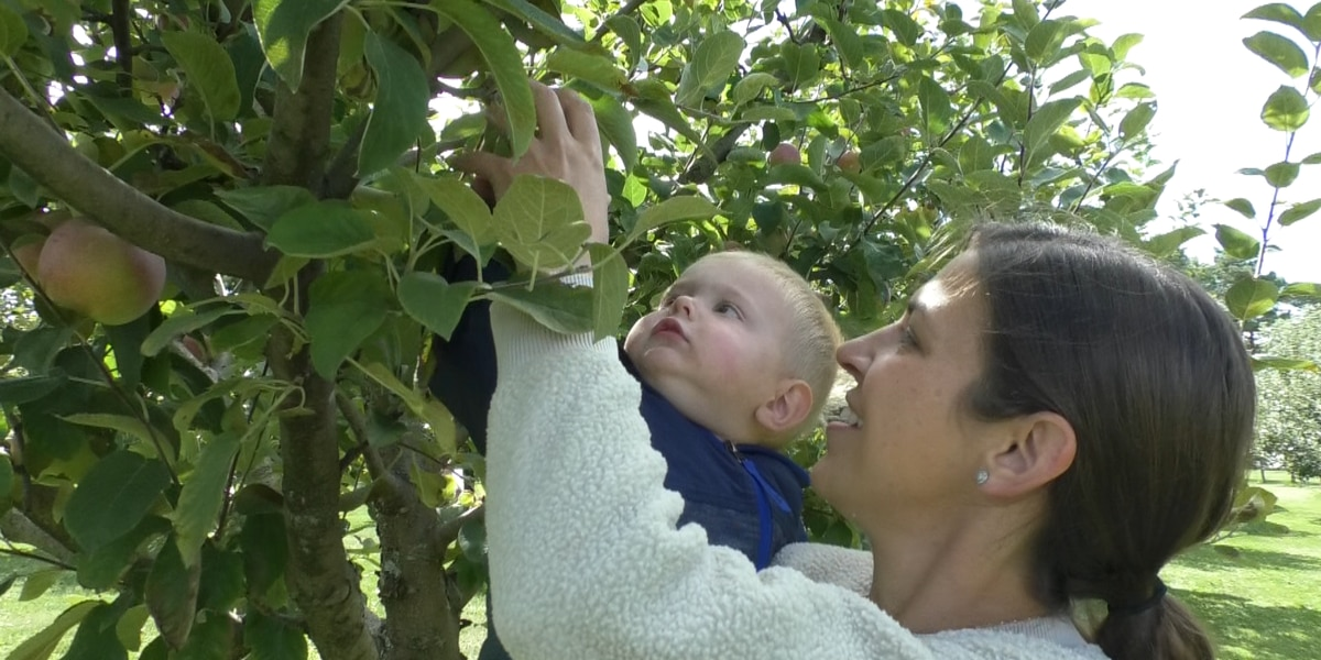 Apple picking season off to a great start