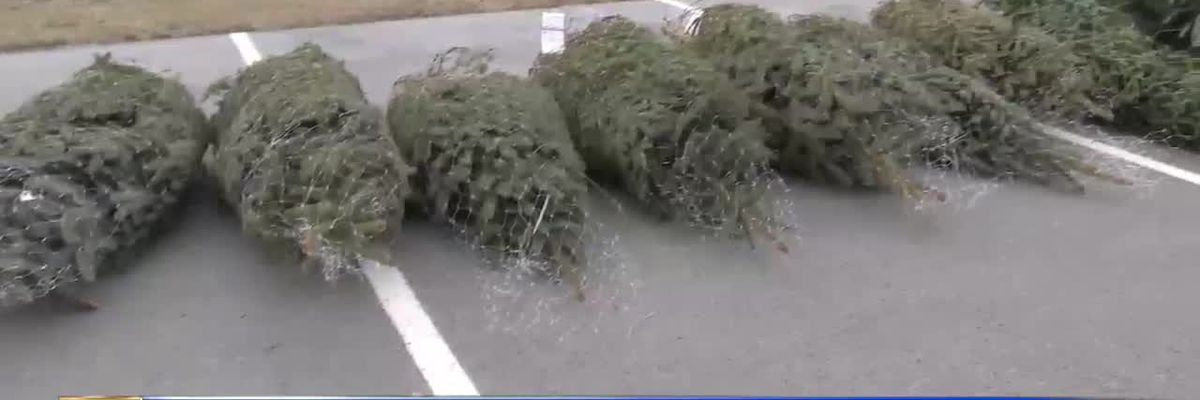 WWNY Trees for Troops brightens soldiers' holidays
