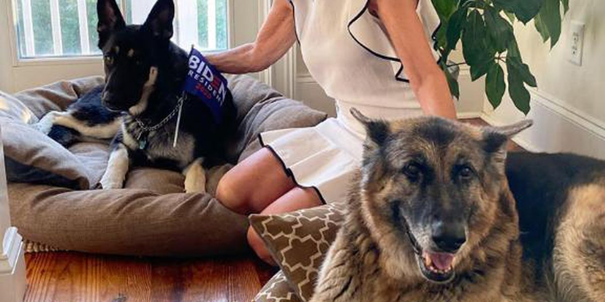 Ruff story: Picture book to honor Biden dogs Champ and Major