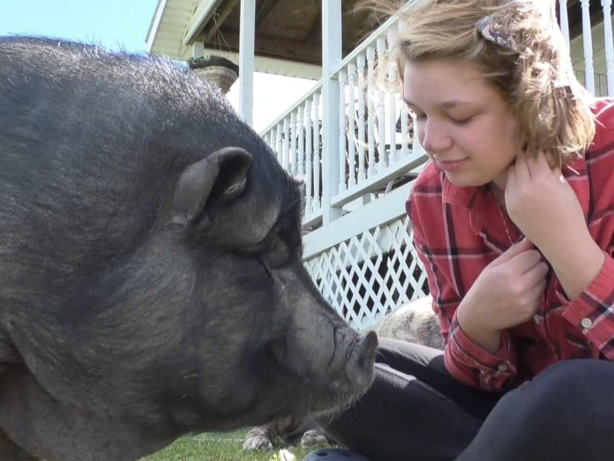 Plenty of piggy pets at this Philadelphia home