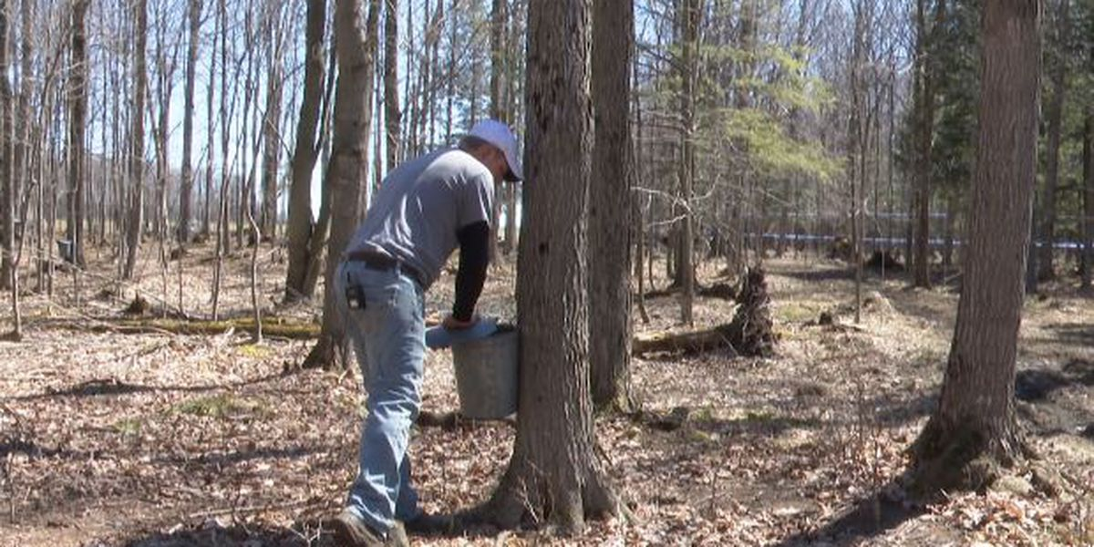 Local maple season comes to early end