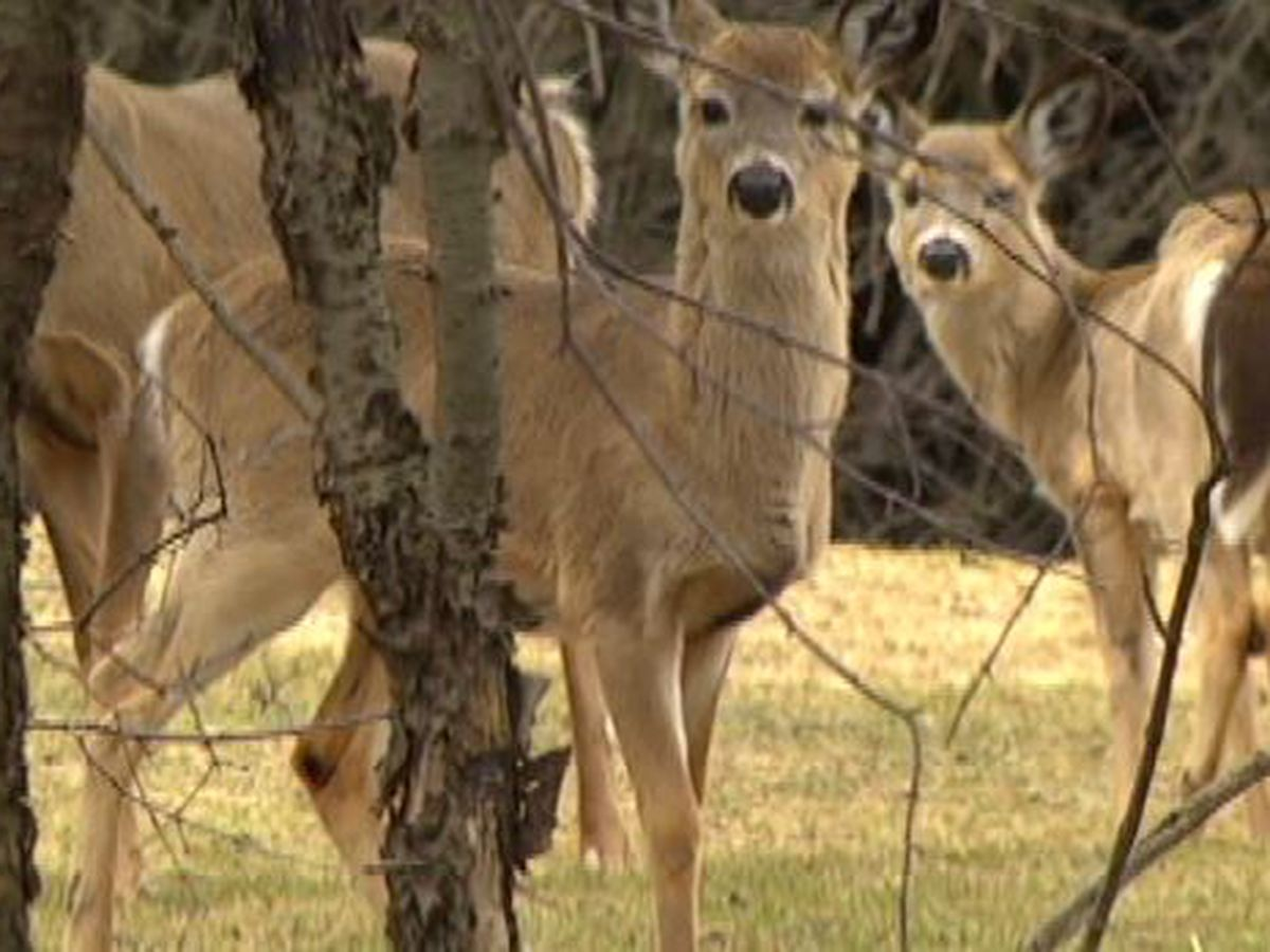 More deer + fewer hunters=cause for concern