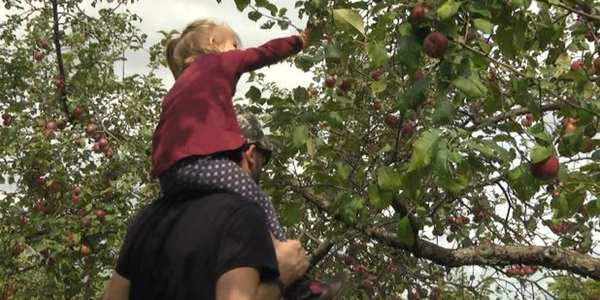 Harvest Tour gives people a taste of farm life