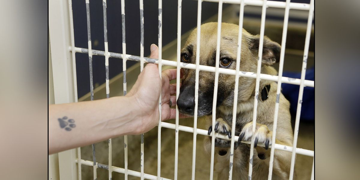 Michigan is now a no-kill state for shelter animals