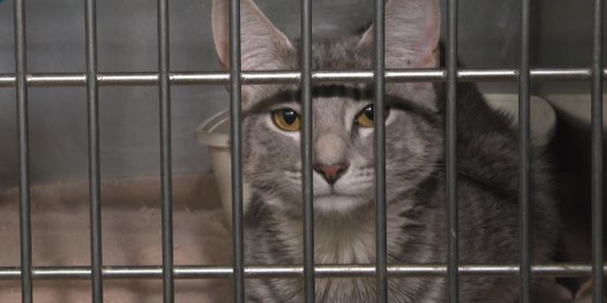 SPCA stops taking in cats due to overcrowding