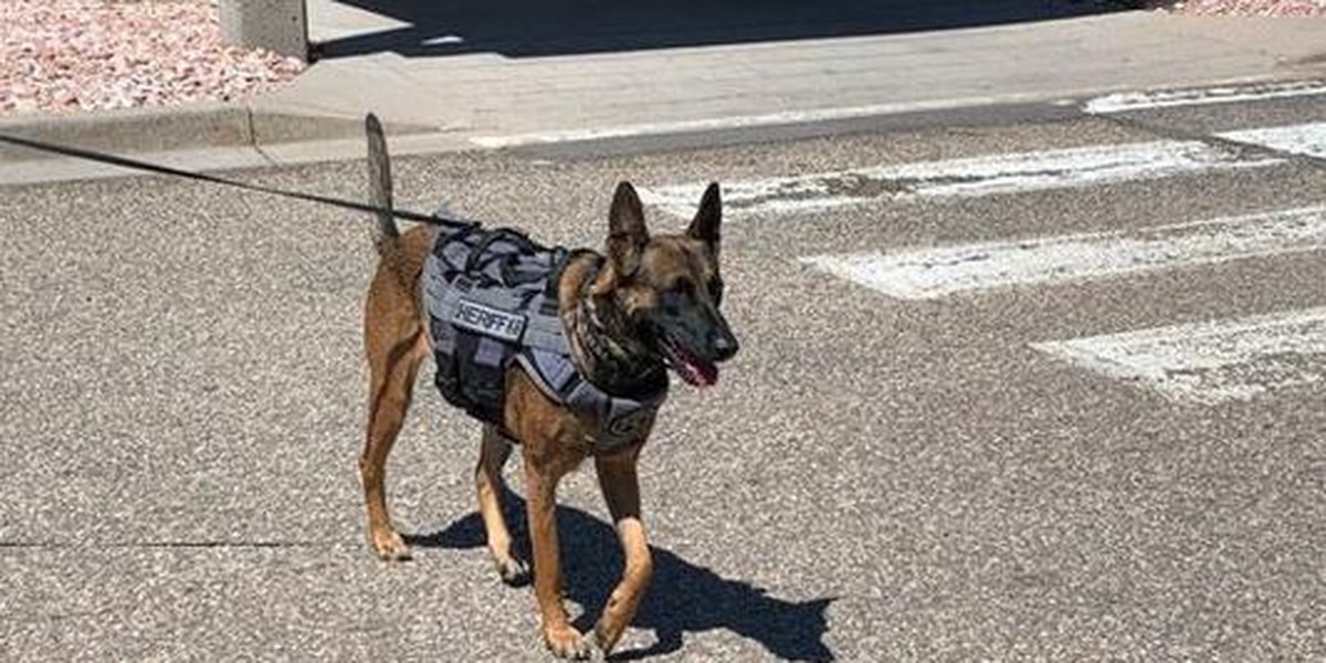 Stray turned K-9 officer gets new 'leash on life'