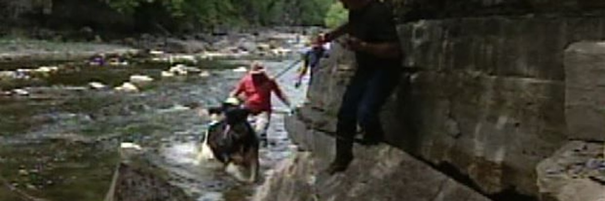 WWNY Blast from the Past: 2000 rescue of cows