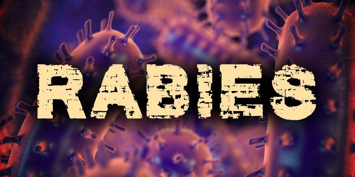 Raccoon in Watertown positive for rabies