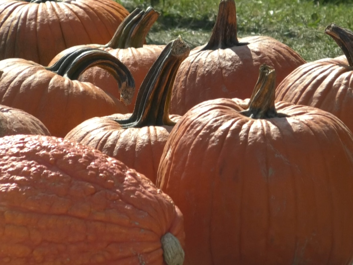 Gouverneur's Annual Pumpkin Fest brings people in from across the north country