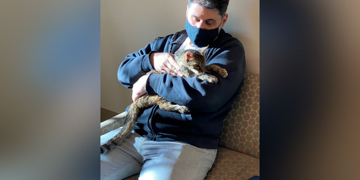Cat that vanished 15 years ago reunited with owner