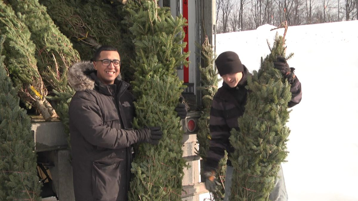 Free Christmas trees for Fort Drum soldiers