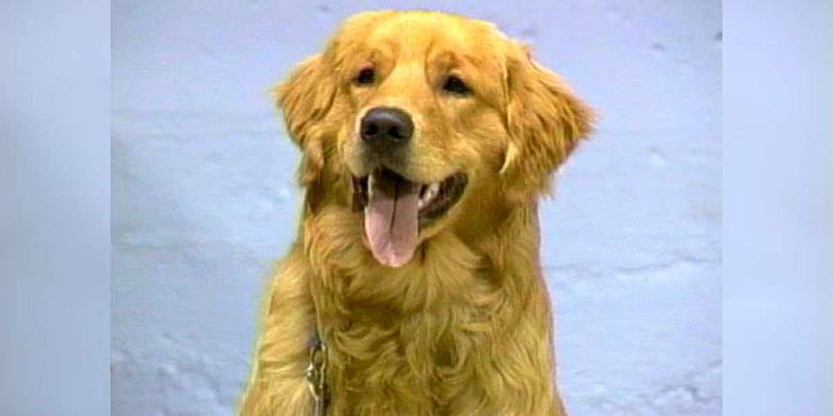 Blast from the Past: 1996 dog obedience school graduation
