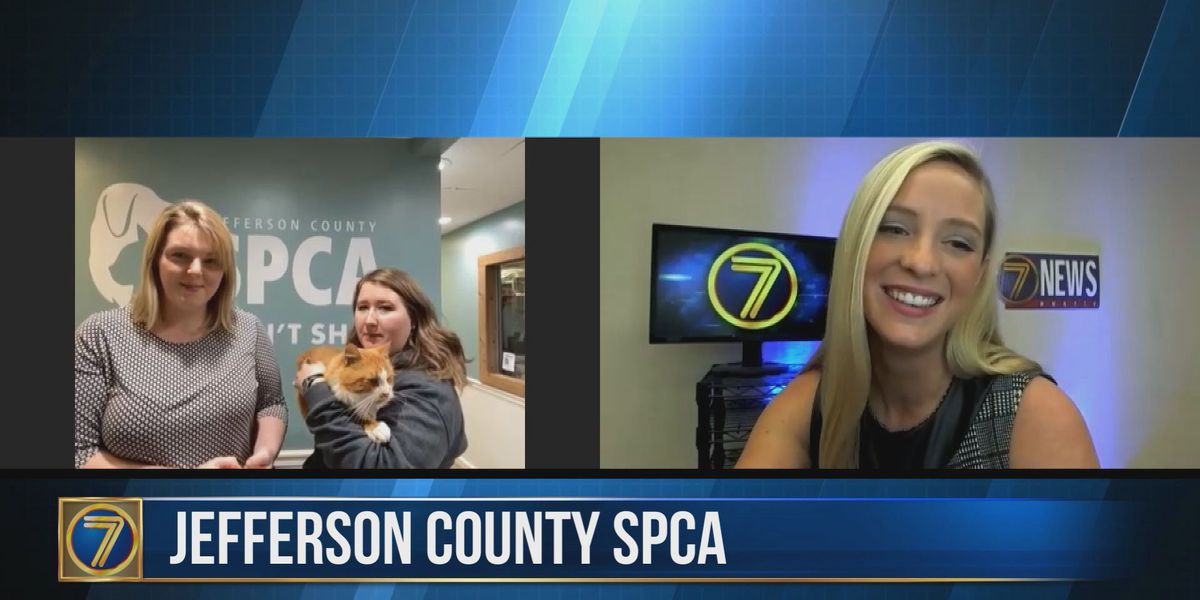 Checking in with the SPCA: Meet Georgie!